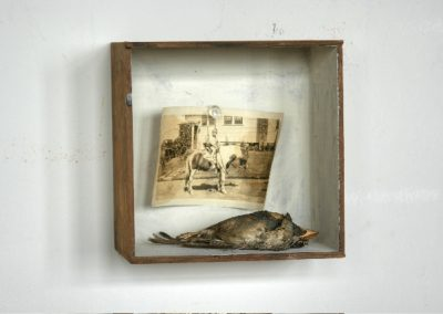 PONY<br />found photograph and dead bird     6 x 6 x 4     2008
